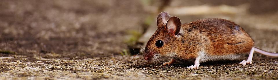 mouse medicine